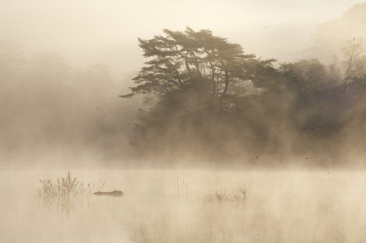 「白露橫江,水光接天。」 人生需要寧靜,因為在寧靜中,可以找回自己,提升自己。