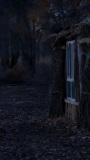 開始恐懼黑夜的來臨。
