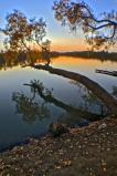 這秋樹與夕陽,是人們心中夢中的詩畫,