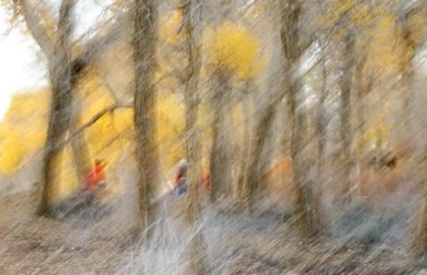 可當嚴冬來臨時,一場凌風厲雨的抽打,