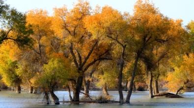 棵棵綠樹郁積多時的幽怨,突然迸發出最鮮活最豐滿的生命