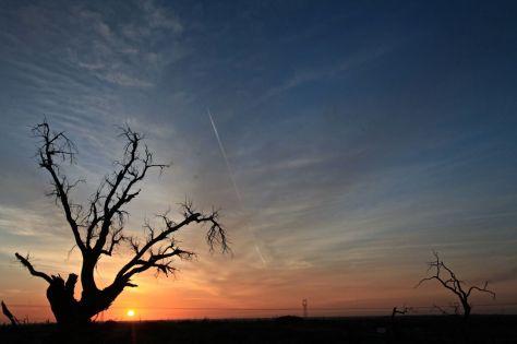 我站在這孑然凄立的胡楊林中,我祈求上蒼的淚,哪怕僅僅一滴;我祈求胡楊、紅柳與紅樹,請它們再堅持一會兒,哪怕幾十年;我祈求所有飽食終日的人們背著行囊在大漠中靜靜地走走,哪怕就三天。我想哭,我想為那些仍繼續拼搏的戰士而哭,想為倒下去的傷者而哭,想為那死而不朽的精神而哭,想讓更多的人在這片胡楊林中都好好地哭上一哭。
