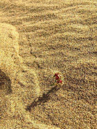 胡楊,是我平生所見最包容的樹。包容了天與地,包容了人與自然。胡楊林中,有梭梭、甘草、駱駝草,它們和諧共生。容與和,正是儒學的真髓。胡楊林是碩大無邊的群體,是一榮俱榮、一損俱損的團隊,是典型的東方群體文明的構架。胡楊的根莖很長,穿透虛浮漂移的流沙,竟能深達20米去尋找沙下的泥土,並深深根植於大地。如同我們中國人的心,每個細胞、每個支干、每個葉瓣,無不流動著文明的血脈,使大中國連綿不息的文化,雖經無數風霜雪雨,仍然同根同種同文獨秀於東方。